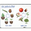 Learning Resources LER6045 Giant Magnetic Plant Life Cycles
