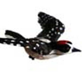 Clark Collection CC1406038 Downy Woodpecker Window Magnet